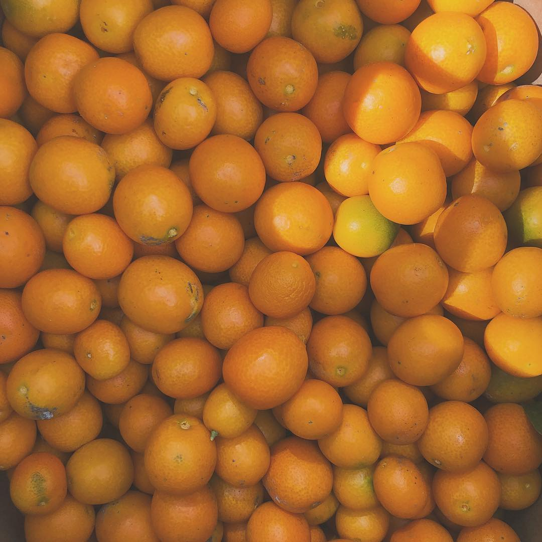 We spent the morning harvesting more kumquats from the tree for the freshest syrup for your Sno-Bliz! Thank you to the Lieder family for the bounty!